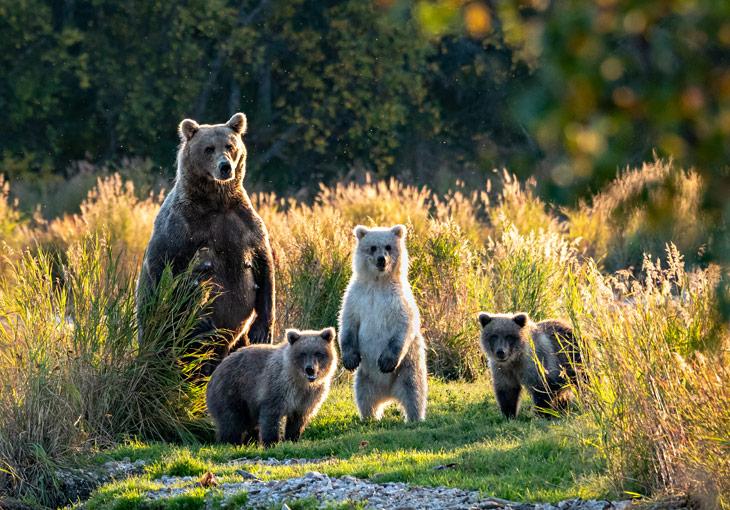 2019_스팟_야생동물 보호센터