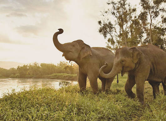 Anantara Golden Triangle Elephant Camp and Resort